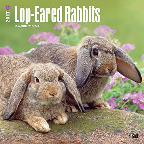 2017-monthly-wall-calendar-lop-eared-rabbits