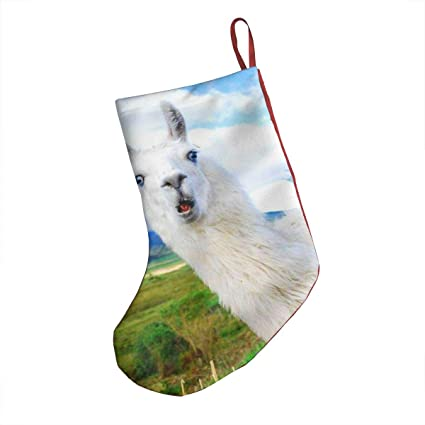 Llama Christmas Decorations.Amazon Com Aznm Astonished Llama Christmas Stockings Sock