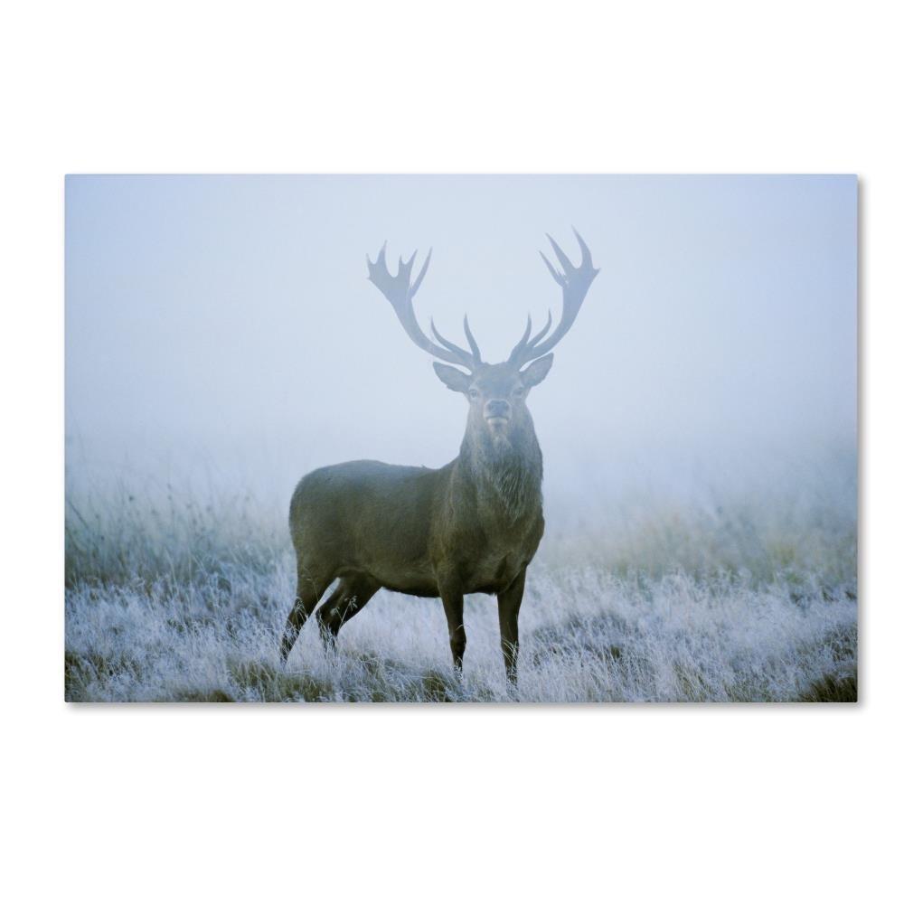 Stag byロバートハーディング画像ライブラリ、12 x 19インチキャンバス壁アート B0762Q1WPD