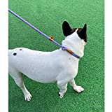 Pet's Company Slip Lead Dog Leash, Reflective