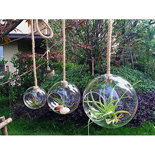 NewDreamWorld's Set of 3 Hanging Orb Terrariums with a Strong Rope-Outdoor Garden for Succulent or Air Plants