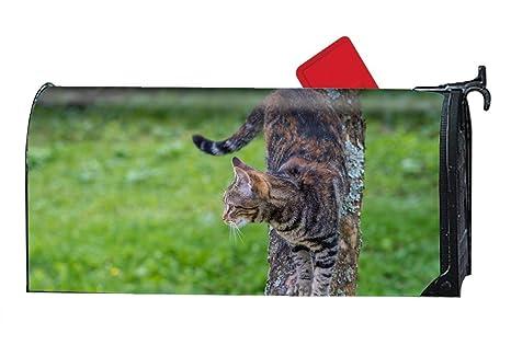 e599d2f6b691 Amazon.com   Verna Christopher Animal Cats Personalized Mailbox ...