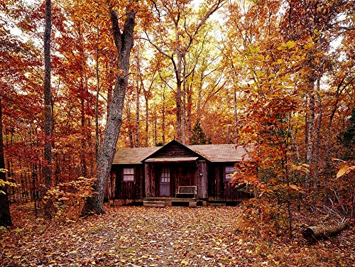 Home Comforts Peel-n-Stick Poster of Fall Log Cabin Autumn Foliage Trees Forest Woods Vivid Imagery Poster 24 x 16 Adhesive Sticker Poster Print