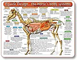 The Horse's Body Systems - A Double-Sided, UV Protected, Laminated Horse Anatomy Chart: A Learning and Teaching Chart for Veterinary Science Professionals, Veterninary Technicians, Horse Lovers