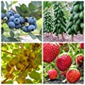 Super Fruits Seeds Strawberry, Blueberry, Kiwi, Papaya Seed 4 Packets
