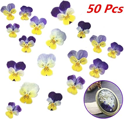 50pcs Pressed Flowers Real Delphinium Dried Flowers for Jewelry Making Crafts