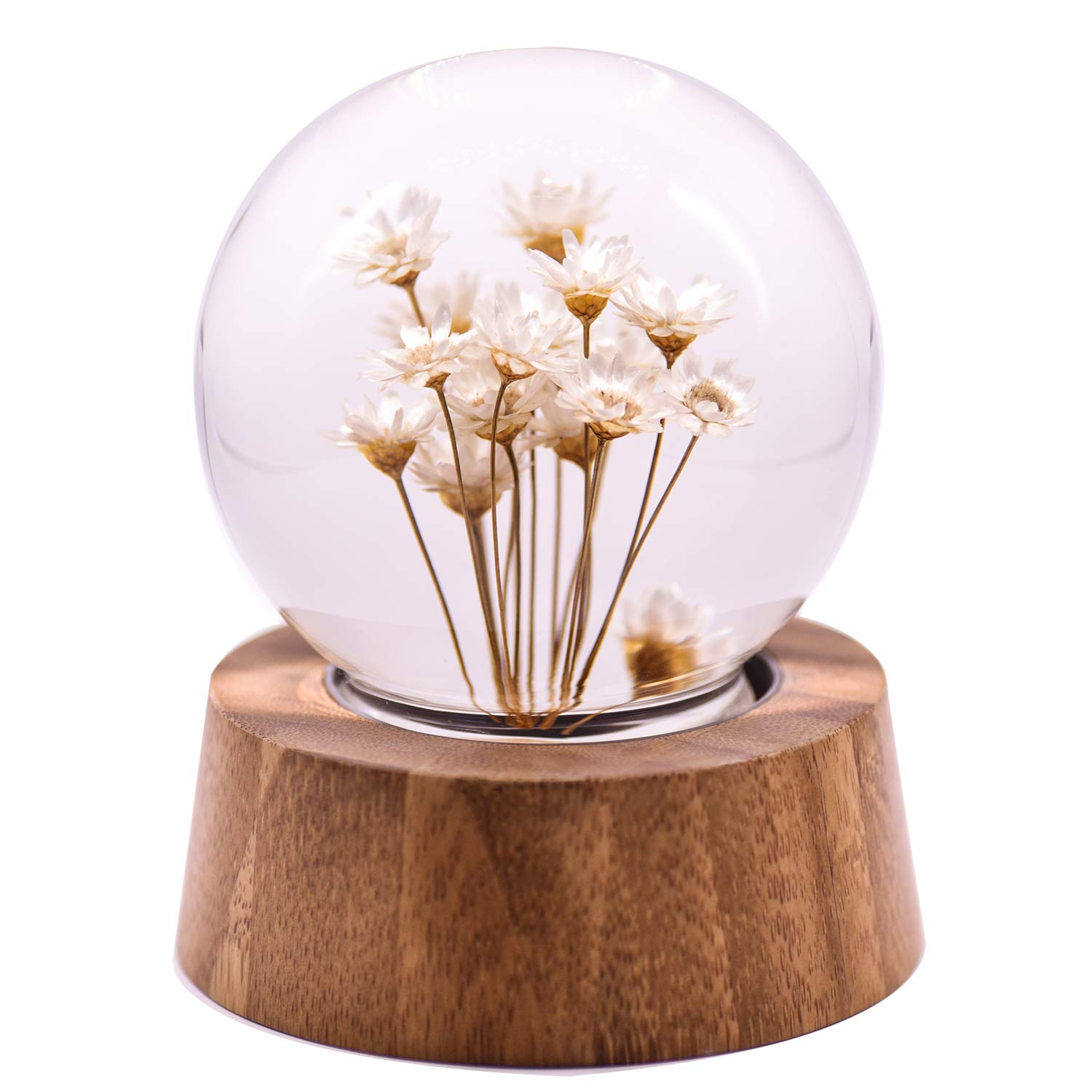 Real Specimens Glass Crystal ball with Wood Base, Everlasting Flower Desktop Ornaments Gift for Christmas/Birthday/Valentine's Day (White Daisy)