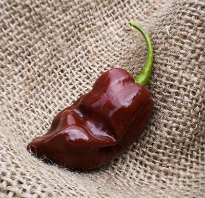 Jamaican Hot Chocolate Habanero Heirloom Pepper Premium Seed Packet + More