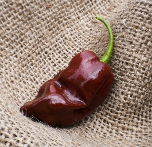 - Jamaican Hot Chocolate Habanero Heirloom Pepper Premium Seed Packet + More