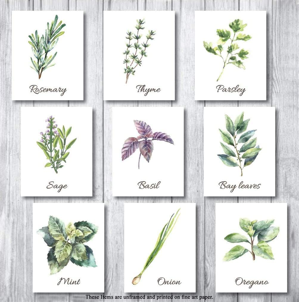 Botanical Prints Wall Decor - Kitchen Art Herbs Leaves Set UNFRAMED Pictures 9 PIECES Nature Floral herb Plant Flower Green Small Botanical Prints Wall Art Vintage Print Poster (White, 8x10)