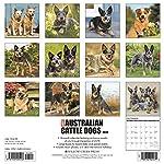 Just Australian Cattle Dogs 2020 Wall Calendar (Dog Breed Calendar) 3