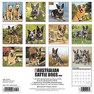 Just Australian Cattle Dogs 2020 Wall Calendar (Dog Breed Calendar) 7