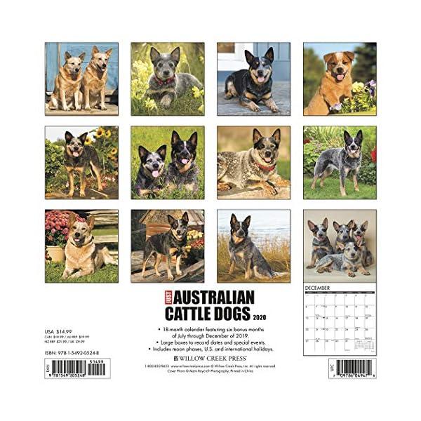 Just Australian Cattle Dogs 2020 Wall Calendar (Dog Breed Calendar) 1