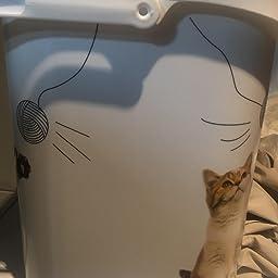 Curver Contenedor Alimentos 4 Kg Gatos: Amazon.es: Productos ...