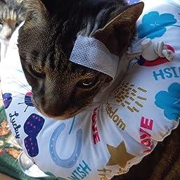 Amazon Edenpetz エリザベスカラー ソフトタイプ 犬 猫 小動物用 介護用 睡眠用 可愛い Mサイズ 招き猫 Edenpetz エリザベスカラー 通販