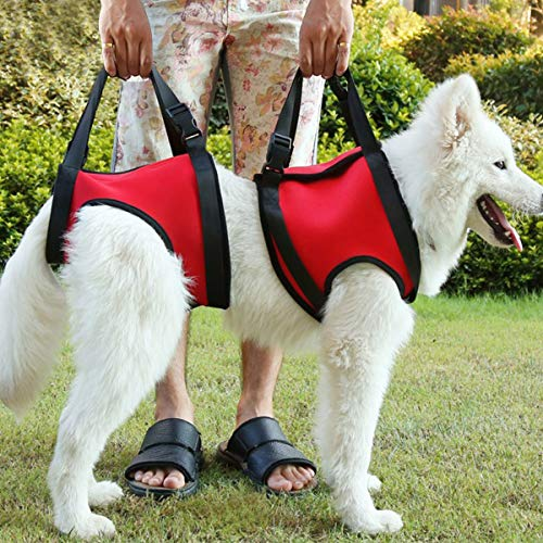 TOYPOPOR Dog Lift Support and Rehab Harness for Dogs with Weak Rear Legs Hind Leg Lifting Canine Aid Assist Sling for Medium Dogs Disabled Injured Elderly Recovery Training (Best Canine Orthopedic Surgeons)