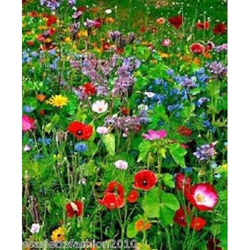Perennial flower seeds amazon premium meadow mix wildflower seeds bee butterfly mix annuals perennial 20g by pretty wild seeds 80 mightylinksfo