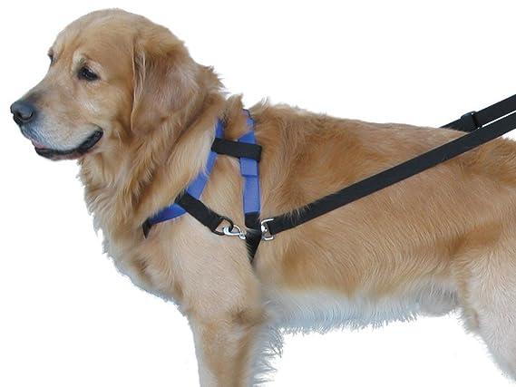 Nobby parte superior Walk arnés para perro: Amazon.es: Productos ...