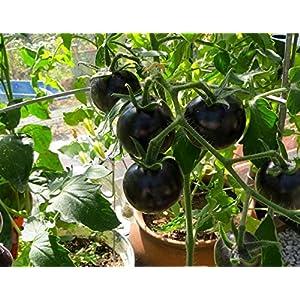 Ncient 20 Semi Sementi di Cherry Pomodori Neri per Orto Semi Vegetali Frutta Profumati Fiori Rari Piante Giardino… 7 spesavip
