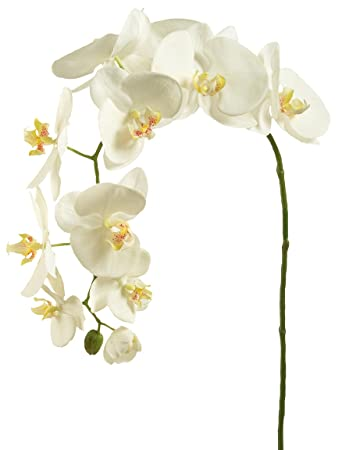 Sia white orchid phalaenopsis artificial flower amazon sia white orchid phalaenopsis artificial flower mightylinksfo