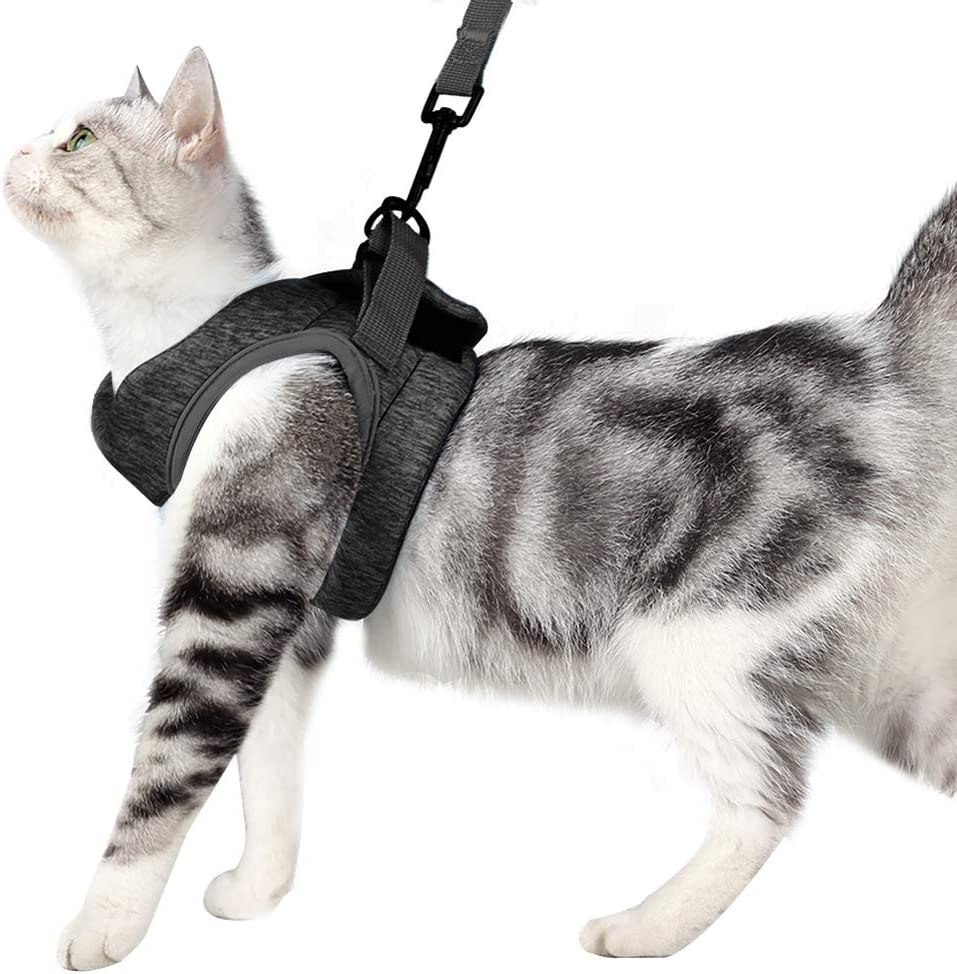 Dotoner Cat Harness And Leash Set Ultra Light Kitten Collar Soft And Comfortable Cat Walking Jacket Running Cushioning Escape Proof Suitable For Puppies Rabbits With Cationic Fabric M Grey Amazon Co Uk Pet Supplies