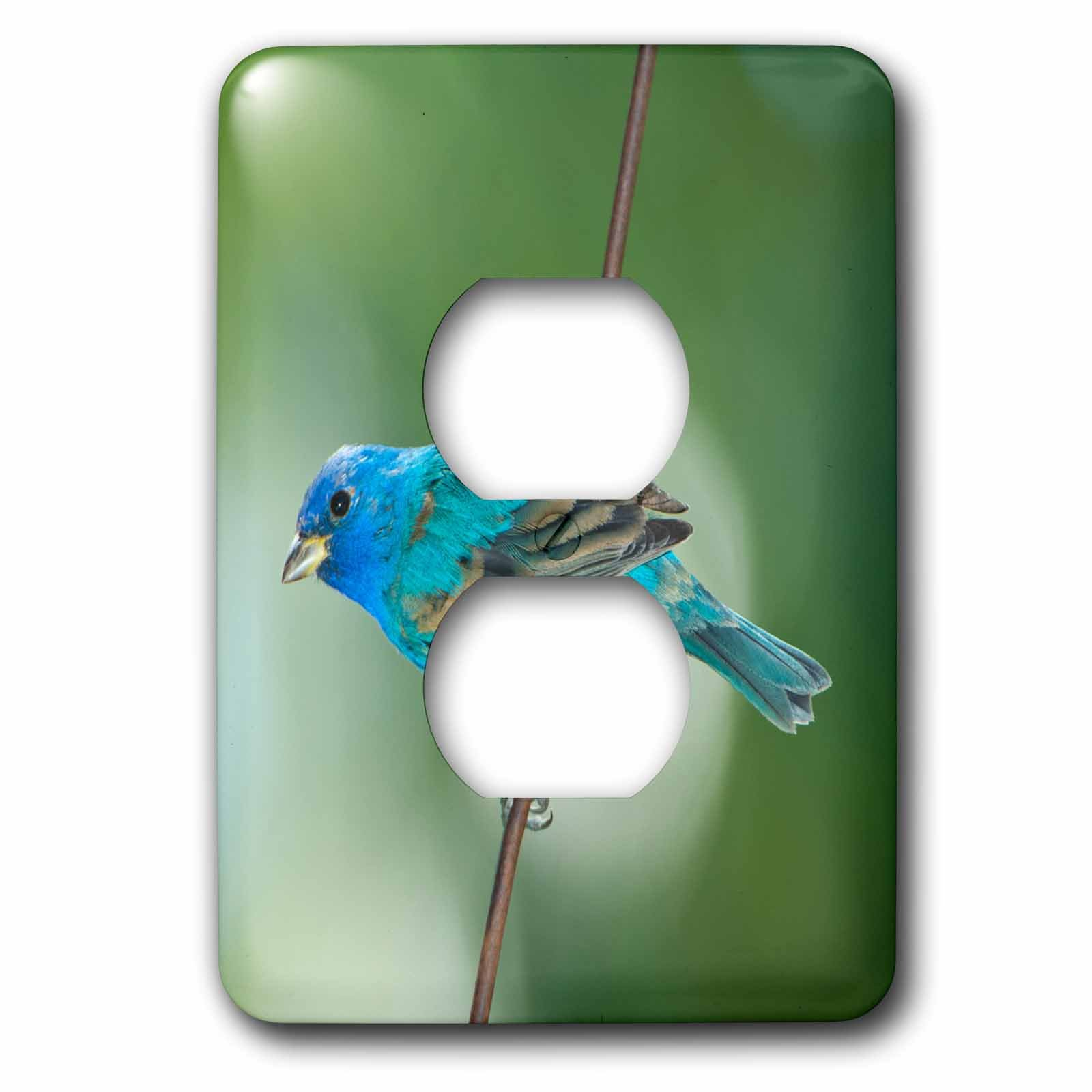 3dRose lsp_230463_6 USA, Florida, Immokalee, Indigo Bunting Perched on Wire Plug Outlet Cover, Mixed