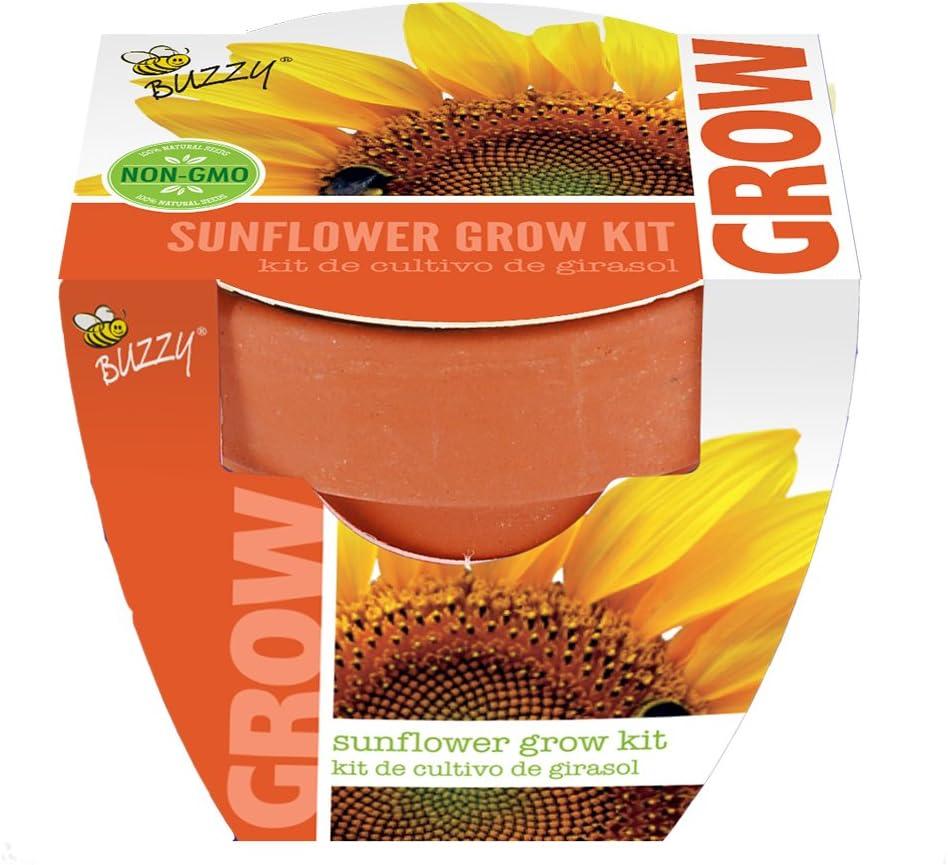 Buzzy 95519 Sunflower Mini Grow Pot Amazon Co Uk Garden Outdoors