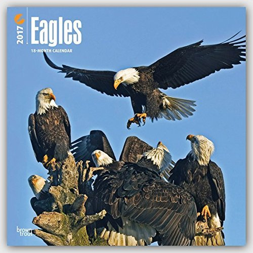 2017Eagle Monthly Wall Calendar