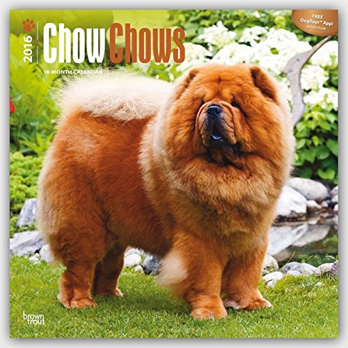 Chow Chows 2016 - 18-Monatskalender mit freier DogDays-App: Original BrownTrout-Kalender [Mehrsprachig] [Kalender] (Wall-Kalender)