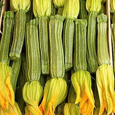 Greyzinni Hybrid Zucchini Summer Squash Garden Seeds - Non-GMO - Vegetable Gardening Seed