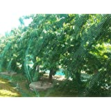 CandyHome Green Anti Bird Protection Net Mesh Garden Plant Netting Protect Seedlings Plants Flowers Fruit Trees Vegetables fr