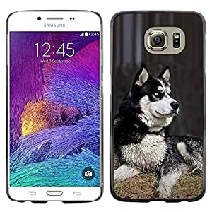 Be Good Phone Accessory // Dura Cáscara cubierta Protectora Caso Carcasa Funda de Protección para Samsung Galaxy S6 SM-G920 // Husky Siberian Dog Sledge Polar