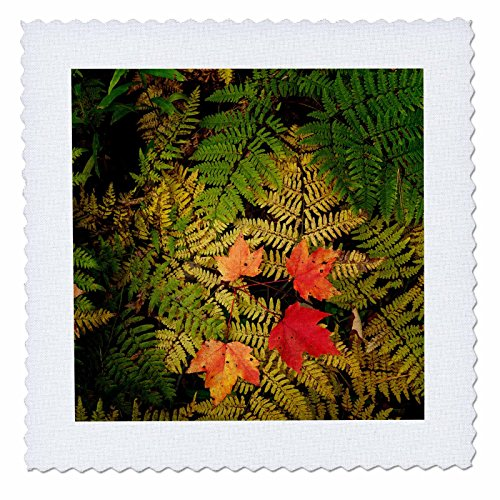 3dRose Danita Delimont - Botanical - Autumn foliage, Hiawath