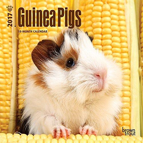 Guinea Pigs 2017 Mini 7x7