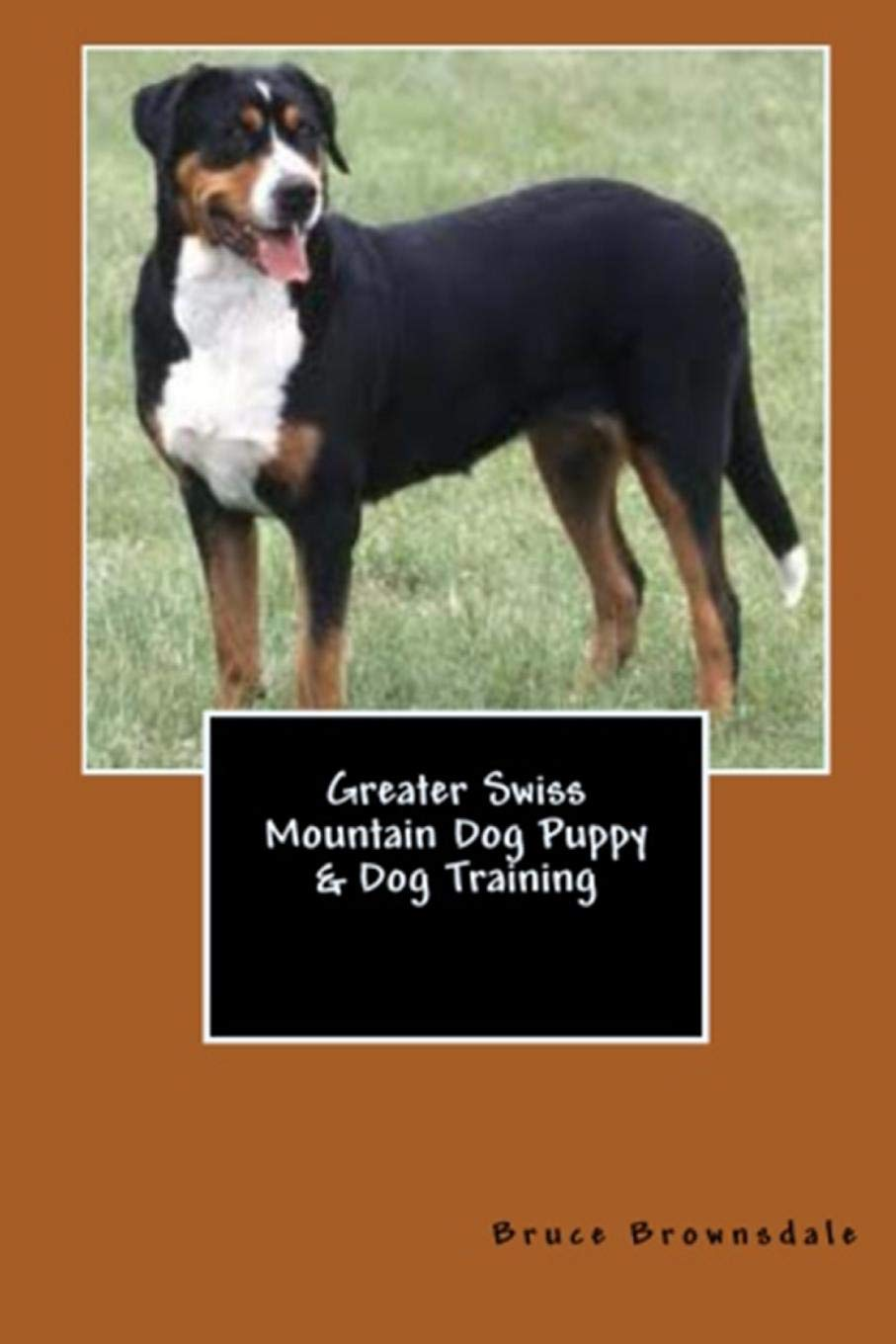 Greater Swiss Mountain Dog Puppy Dog Training Vince Stead