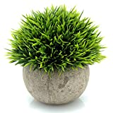 "Sometimes a subtle, accent decoration fits the bill. That's exactly what these mixed cedar topiary provide. They are small (about 4.7""), delicate looking (with beautiful, almost ""fluffy"" faux cedar), and come in a lovely little planter.  As d..."