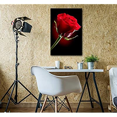 Canvas Prints Wall Art - Closeup of Red Rose Flower Against Black Background | Modern Wall Decor/Home Decoration Stretched Gallery Canvas Wrap Giclee Print & Ready to Hang - 32