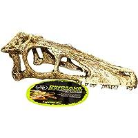 Komodo Raptor Skull Small