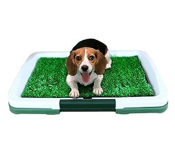 DAN Perro inodoro césped 3 capa aseo pequeño perro inodoro perro urinario suministros para mascotas: Amazon.es: Deportes y aire libre