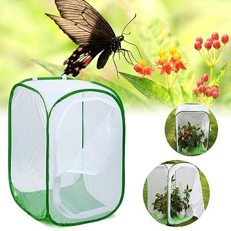 Luyao Caja de cría de Insectos Grande Plegable Caja de incubación ...