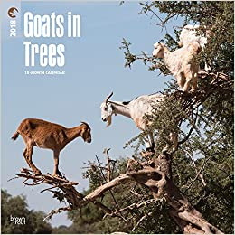 Goats in Trees 2018 12 x 12 Inch Monthly Square Wall