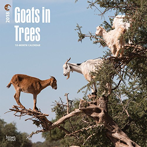 Goats in Trees 2018 12 x 12 Inch Monthly Square Wall Calendar, Best Calendar Funny Farm Animals (English, French and Spanish Edition) cover