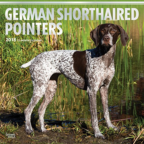 Calendar Pointer (German Shorthaired Pointers 2018 12 x 12 Inch Monthly Square Wall Calendar with Foil Stamped Cover, Animals Dog Breeds)