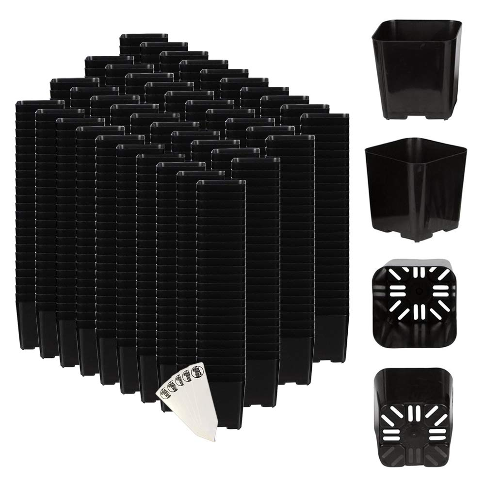 The Hydroponic City Black Square Flower Pots for Starting Seedlings, Succulents, or Cacti - 2'' x 2'', Pack of 1000 + THCity Stakes