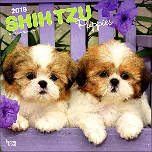 Shih Tzu Puppies Calendar 2018 - Deluxe Shih Tzu Puppies Wall Calendar (12x12)