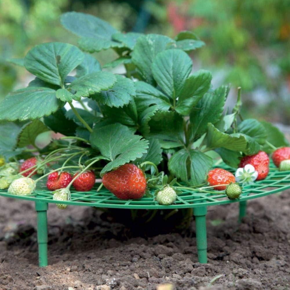 Bestlle - 10 Marcos de plástico para Plantar Frutas, Plantas de ...