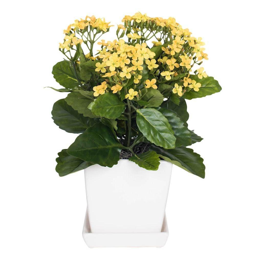Vickerman F12233 Yellow Kalanchoe Everyday Floral