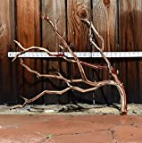 Manzanita Driftwood 20'-24'