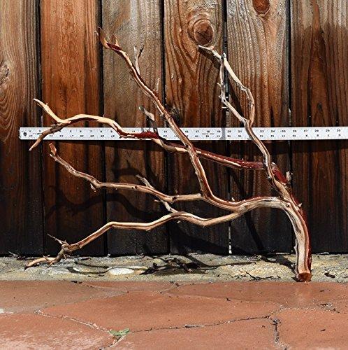 Manzanita Driftwood 20