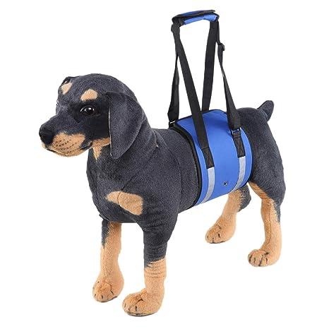 AMhuui Soporte de elevación para Perro, protección para Mascotas ...